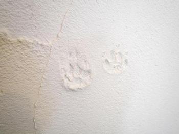 ライオンホームでキッチンリノベーション。ネコさん達の可愛い手形が壁の漆喰に押されています。漆喰の壁はご家族で塗られました。真っ白でキレイです。
