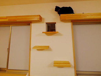 長岡京市の店舗をリビングにリフォーム。リフォーム後のリビングです。窓の上にはネコのキャットウォークを付けました。