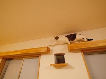 長岡京市の店舗をリビングにリフォーム。キャットウォークを渡る猫です。楽しそうです。