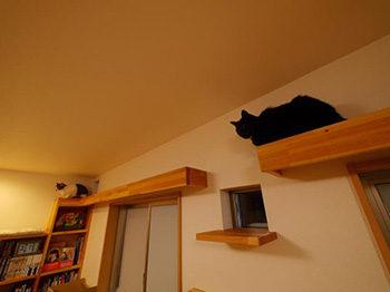 長岡京市の店舗をリビングにリフォーム。猫がキャットウォークで遊んでいます。
