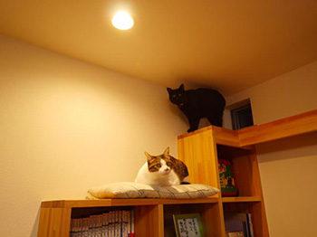 長岡京市の店舗をリビングにリフォーム。猫が階段型本棚の上でくつろいでいます。