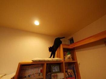 長岡京市の店舗をリビングにリフォーム。猫が階段型本棚の上で遊んでいます。