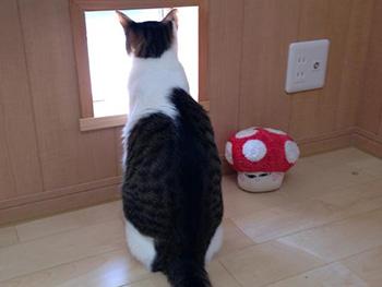 長岡京市の店舗をリビングにリフォーム。猫専用の小窓から、猫が外を覗いています。