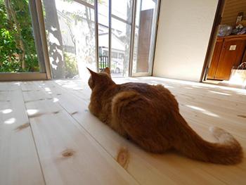 ライオンホームのリノベーション。ネコがリビングの無垢材のフローリングの上で寝そべっています。