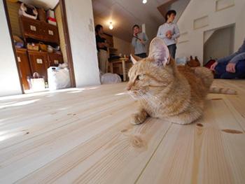 ライオンホームのリビングリノベーション。リフォーム後のリビングの床です。ネコが無垢材のフローリングの上でくつろいでいます。