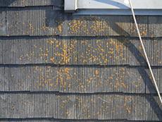 長岡京市の屋根外壁塗装リフォーム。屋根に苔が生えています。これは塗膜が劣化し、撥水効果がない証拠です。